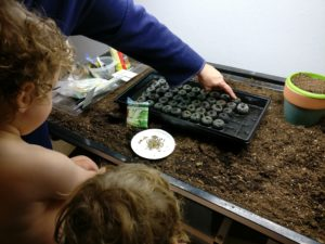 Then instructed on placing the seeds in the dirt.